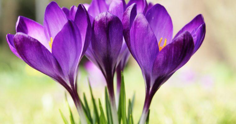 Wiosna, wiosna ach to Ty….detoks dzień #3